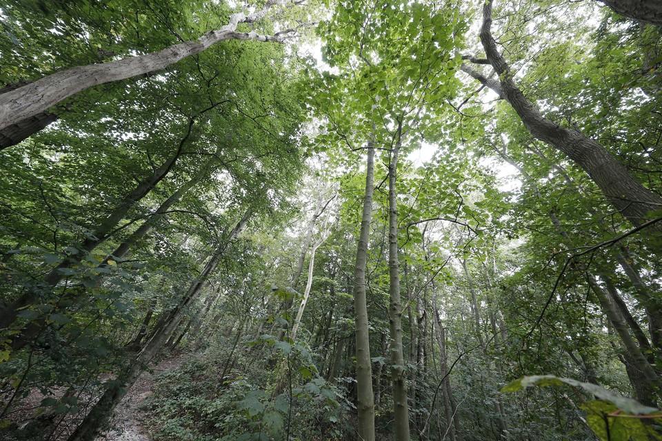 Voor 3,5 ton ben je boswachter in je eigen bos.