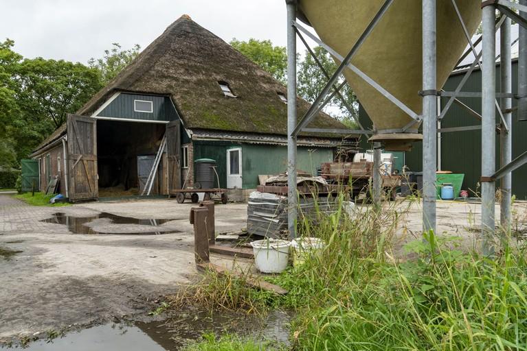 Boer Nico schept nog dagelijks de mest van zijn koeien met de hand weg. Dat is zeldzaam: nog volop melken in stolp. 'Mijn koeien gaan langer mee'