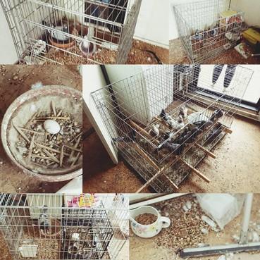 Ruzie tussen duivenmelker en rokende buurman escaleert, politie neemt duiven in beslag