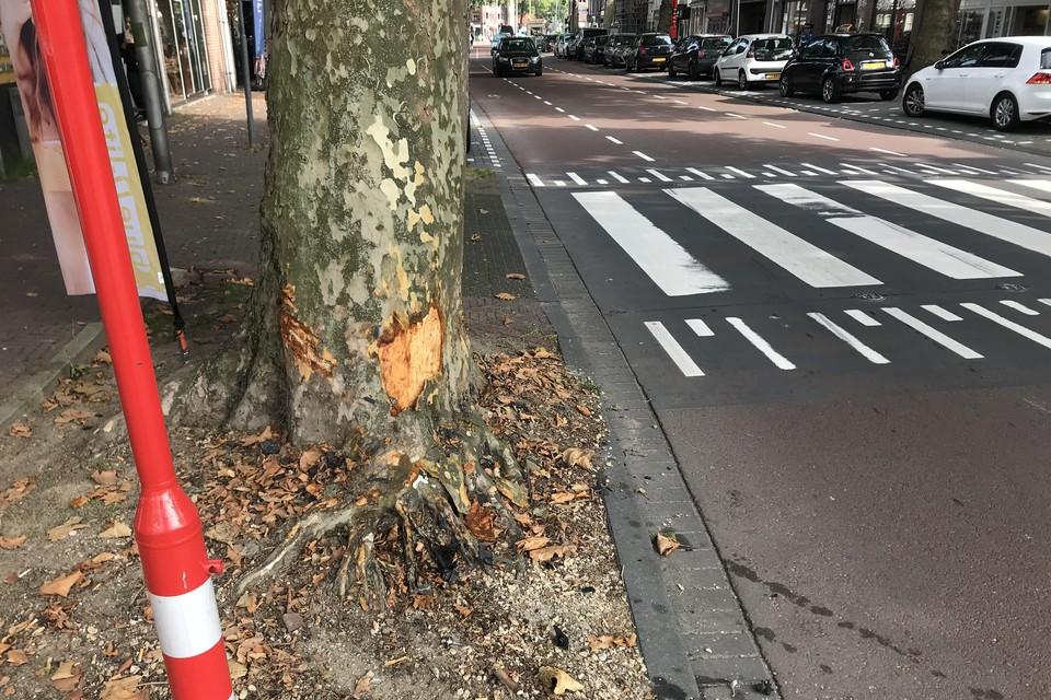 De bestuurder vloog uit de bocht en reedt tegen een boom aan de Westerstraat.