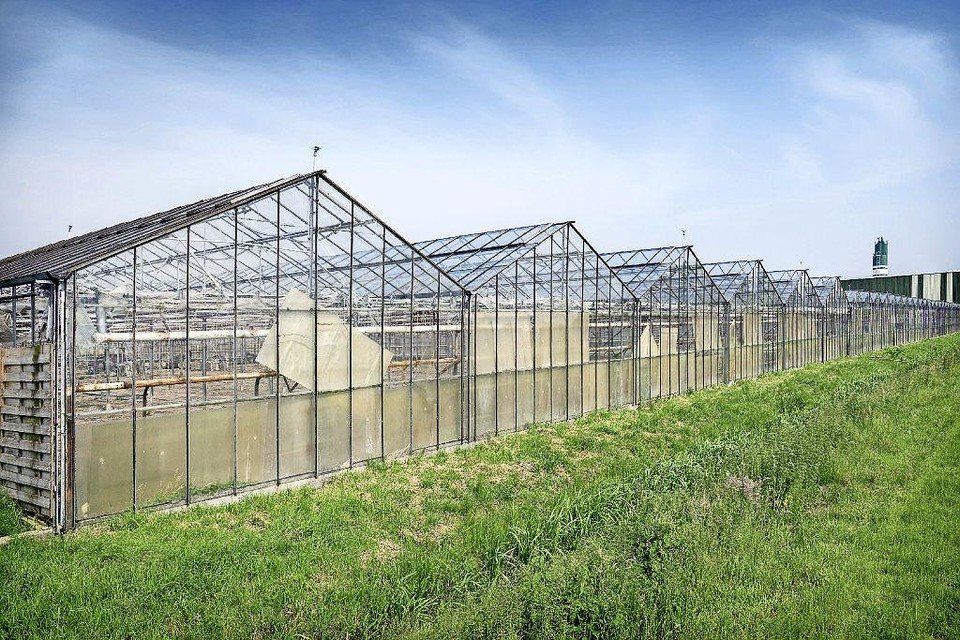 Van dit beeld wil Rijsenhout af. De gemeente wil meewerken, als de grondeigenaren het eens zijn.