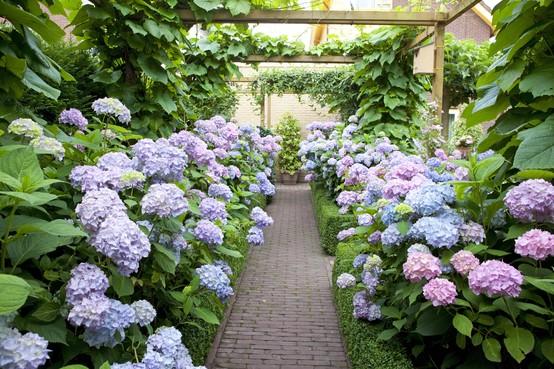 Hortensia's in de mooiste kleuren