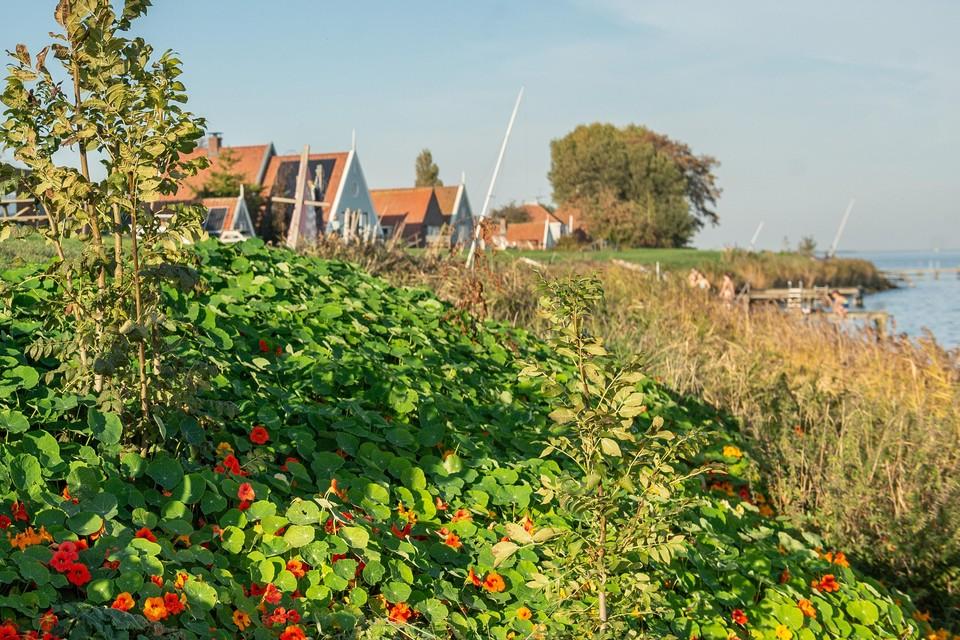 De dijk bij Uitdam is nu groen en de bewoners willen dat hij dat ook na de dijkversterking weer wordt.