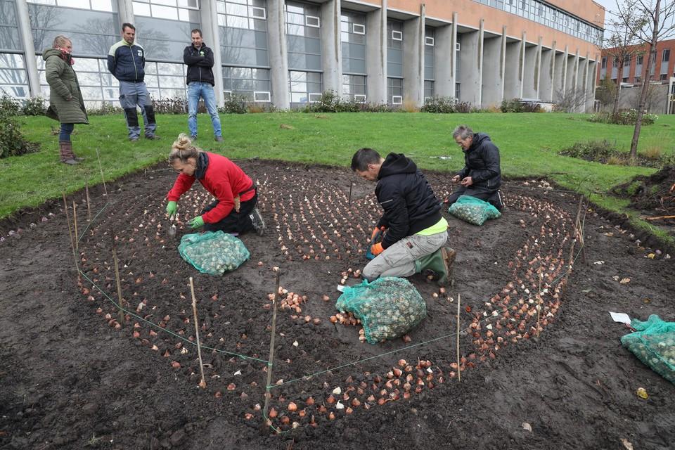 Vrijwilligers planten bollen in hartvorm bij het Dijklander in Hoorn.