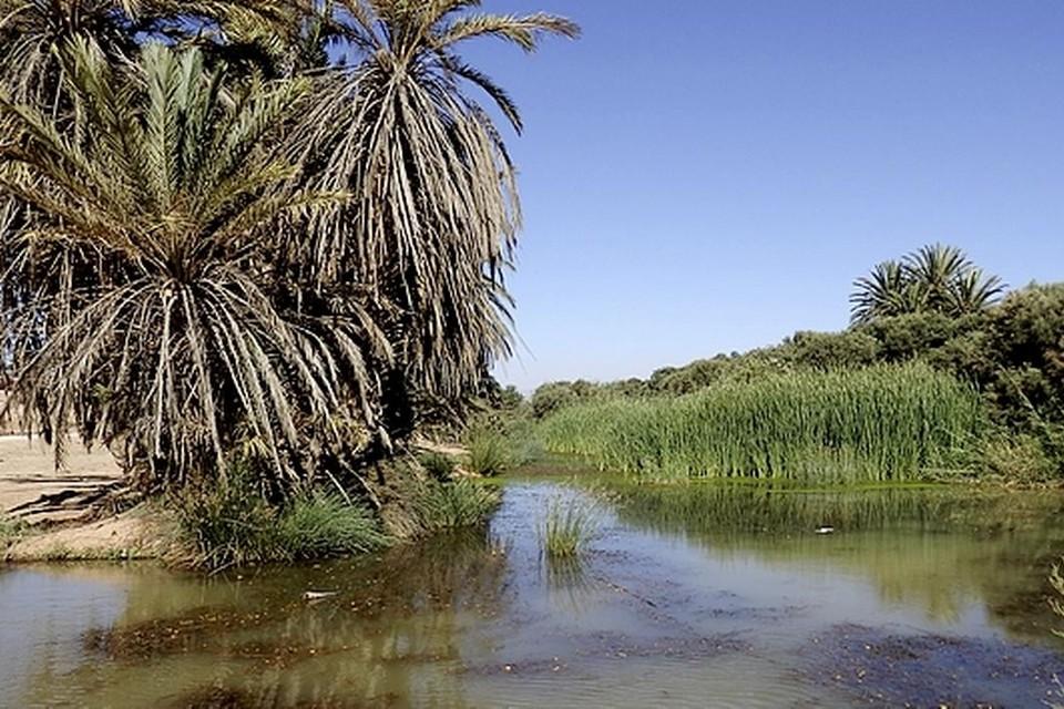...een groene oase met ruisende palmbomen...