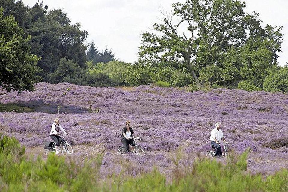 De Tafelbergheide in bloei.