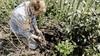 Boer Tom maakt een egelvriendelijke tuin