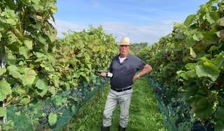 C'est la qualité qui compte, in wijngaard Saalhof. Minder druiven, betere wijnen [video]