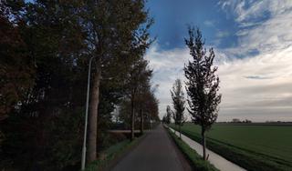 Hoogheemraadschap kapt in Spierdijk en Twisk 70 bomen met iepziekte