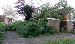 Boom valt op drie schuurtjes en dak van woning in Krommenie