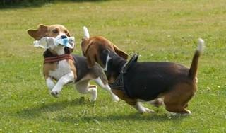 Eindelijk duidelijkheid voor Blaricumse honden. Raad blij met losloopgebieden in Bijvanck en Blaricummermeent