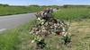 Bloemenhulde voor omgekomen jonge vrouwen aan Zeeweg in Overveen