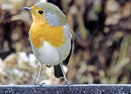Column In 60 seconden: Tuinvogeltelling