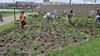 Bewoners van de Stroomwal in de Broekpolder maken zelf hun buurt groener en fleuriger