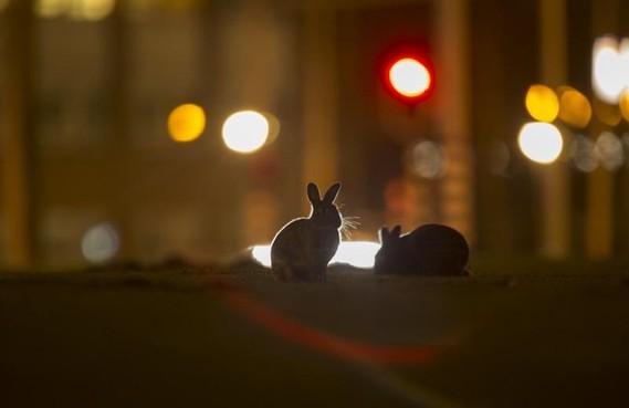 Helderse brugklassers filmen stads dierenleven