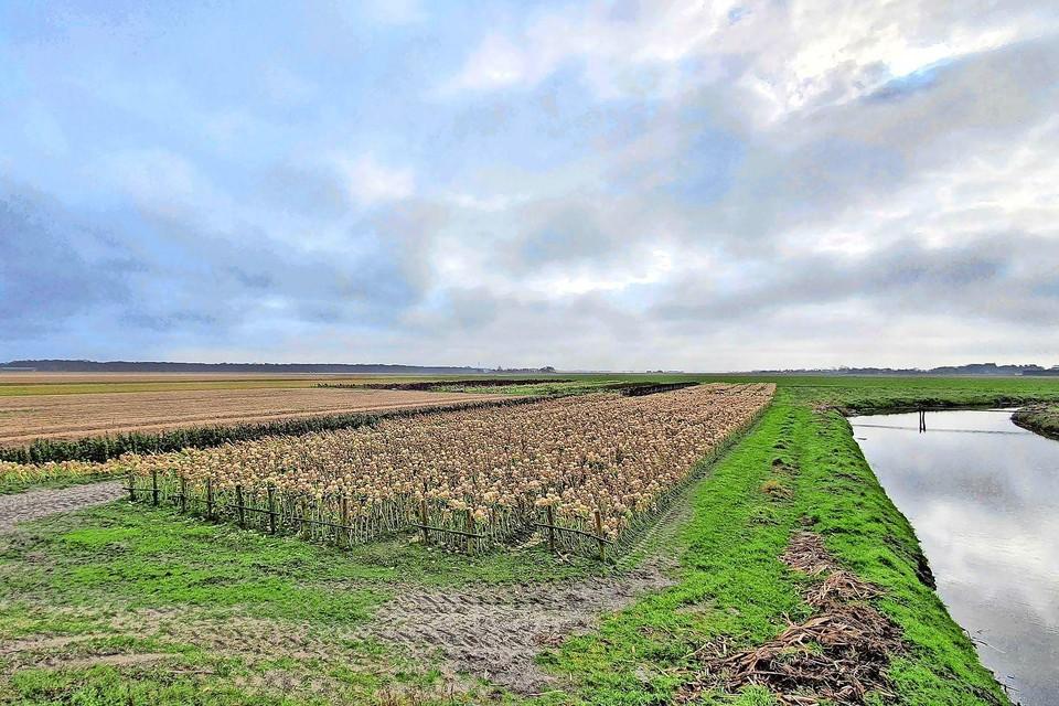 Het bewuste agrarische gebied tussen Egmond-Binnen en Heiloo.