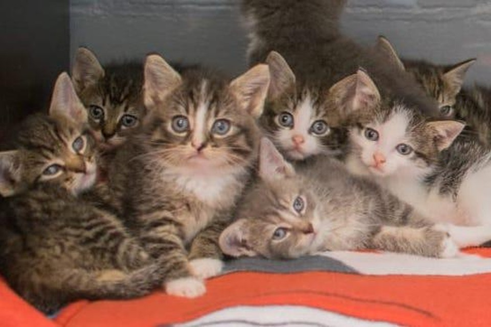 Een aantal van de kittens.