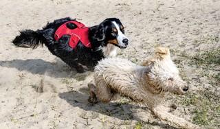 POV Zaanstad wil subsidiekraan resoluut dichtdraaien maar hondenbelasting mag weg