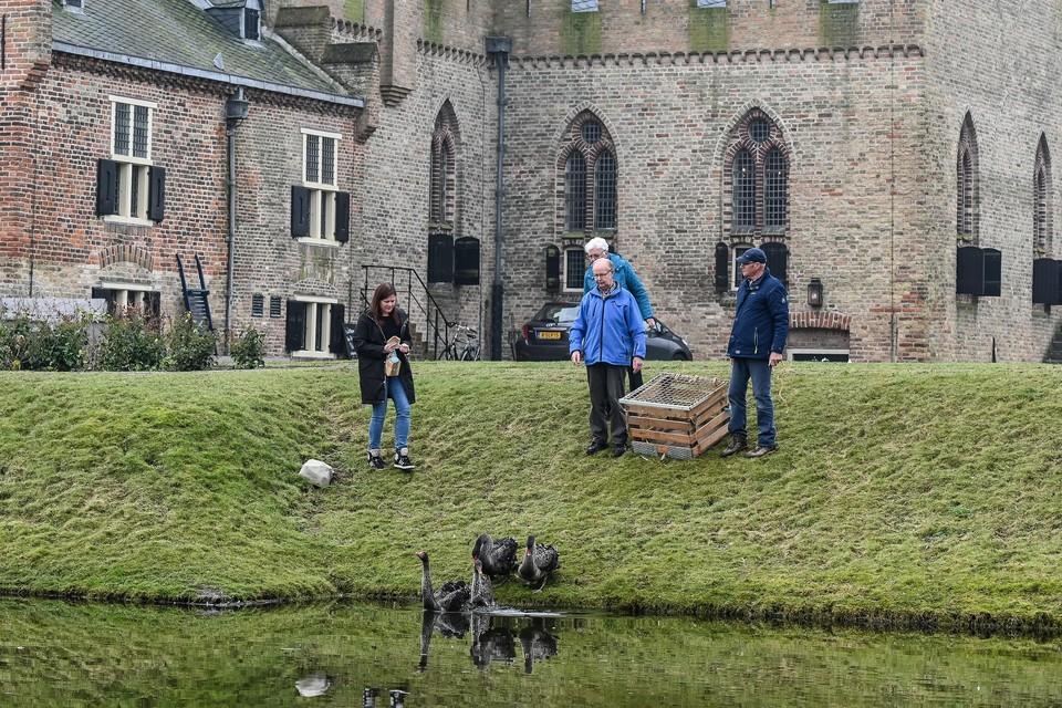 De zwanen mogen los! Links kasteelvrouw Emma Buius, De zwarte zwanen worden uitgezet in de slotgracht van Radboud.