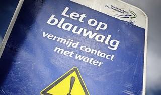 Waarschuwing voor blauwalg: hier kun je momenteel beter niet zwemmen in natuurwater