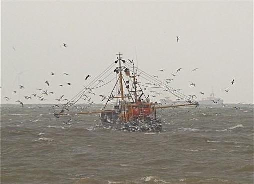 Prijs voor vis is dramatisch laag: stilligregeling voor schepen in de maak