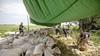 Poolse specialisten scheren in een paar uur tijd de hele kudde van Gert van de Bor in Eembrugge; 'Laat in het seizoen? We willen ze in augustus nog kaal hebben anders worden ze levend opgegeten door vliegenlarven'