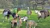 Geiten met de geiten op landelijke Dierendag in Enkhuizen