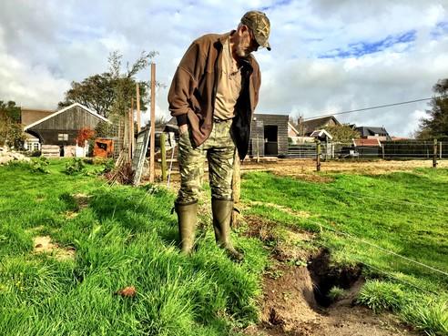 Konijnenplaag zorgt voor veel overlast en enorme schade in Westerland