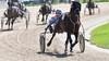 Zeldzaam machtsvertoon van Durk M Boko zorgt voor levendig 'tussendoortje' op Alkmaarse drafbaan