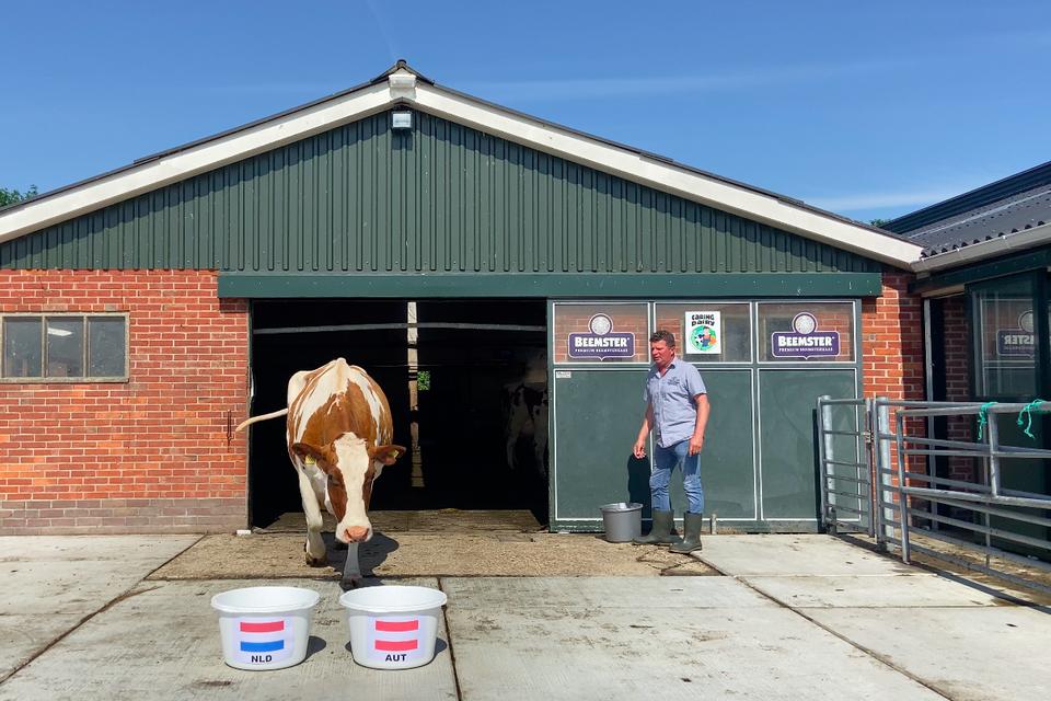 Kiest koe Sijtje voor Nederland of Oostenrijk?
