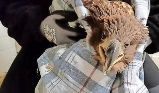 Wat moet er met de plek van het vogelasiel gebeuren na de verhuizing naar de Helderse Vallei? Bedrijven mogen ideeën aandragen