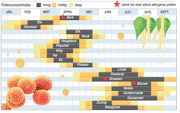 Hooikoorts? Vragen over pollenallergie tijdens de coronacrisis