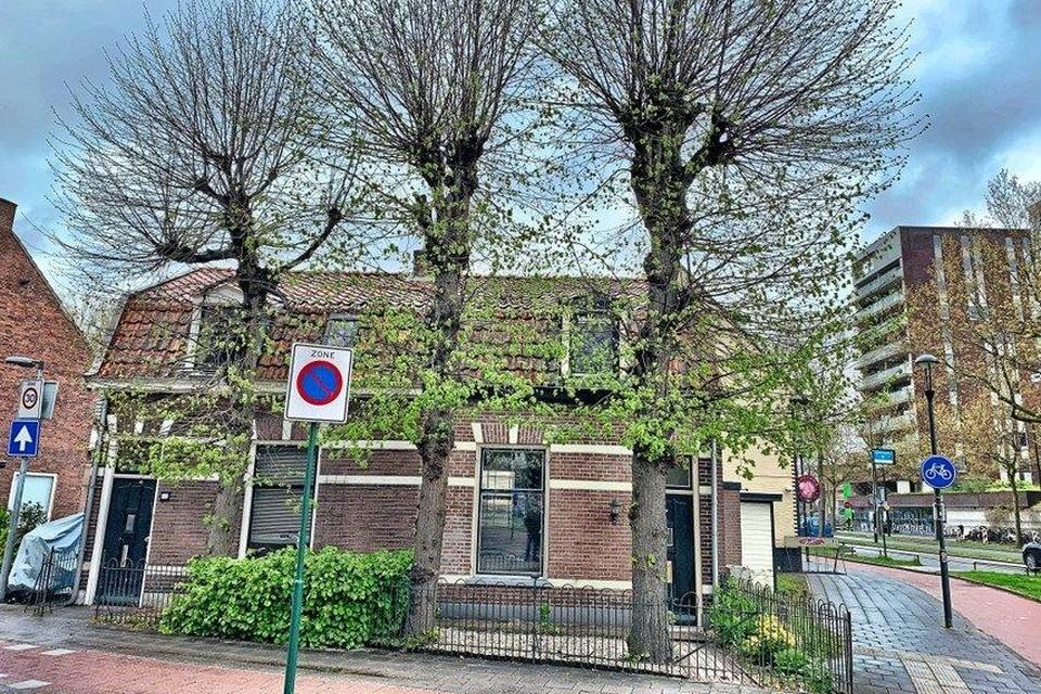 Oude knotlinden op de Prins Bernhardstraat.
