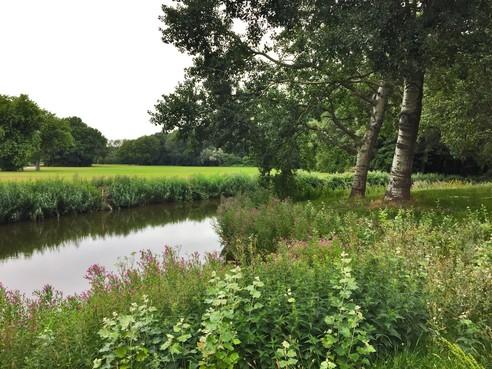 Natuur om de hoek: Decibellen en heksenkruid in Houtrak bij Halfweg