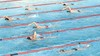 De Zomer Zwem4daagse in Beverwijk staat weer voor de deur