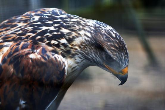 Vogelopvangcentra in Naarden en Soest wachten in spanning de reacties op de motie van de Partij voor de Dieren af