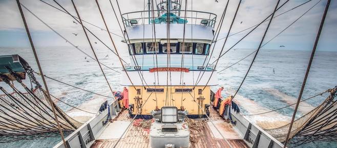 Minister Schouten: pulsvissen niet direct hervatten na positief rapport