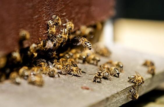 Bijenkasten Andijker Henk Stam moeten na klachten van buren alsnog weg