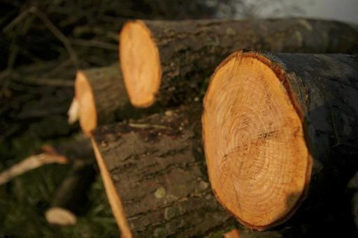 Rechter schorst bomenkap op bungalowpark De Ridderhof in Lage Vuursche