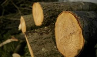 De buren willen 23 bomen weghalen voor nieuwbouw, maar daar zijn omwonenden in Bergen fel tegen: 'Ook onze eigen bomen dreigen te worden gekapt'
