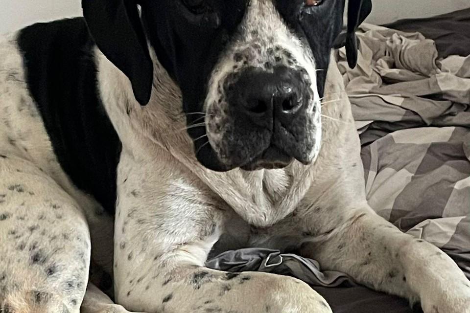 Hond Koe is volgens eigenares Maacha Vrolijk inmiddels aan de beterende hand.