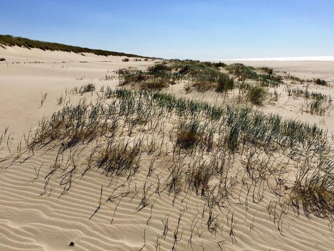 Een tot de nok toe met zand gevulde Johan Cruijff Arena; en dat is allemaal de duinen bij Petten ingewaaid
