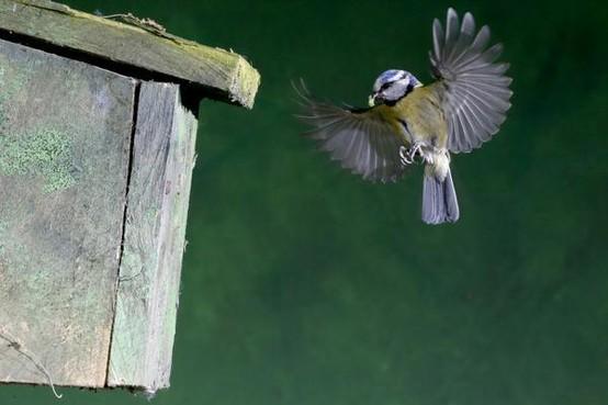 Tijd voor de grote schoonmaak! Maak nu het nestkastje in de tuin op orde en dan beschermt het vogels tegen de kou