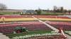 Zien: prachtige dronebeelden van Hillegomse tulpentuin [video]
