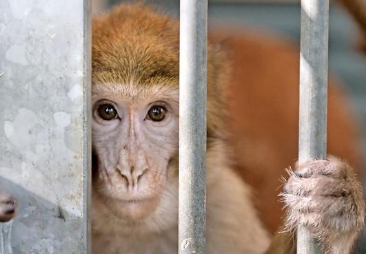 Ed Nijpels: 'Dierenbescherming is geen linkse hobby'