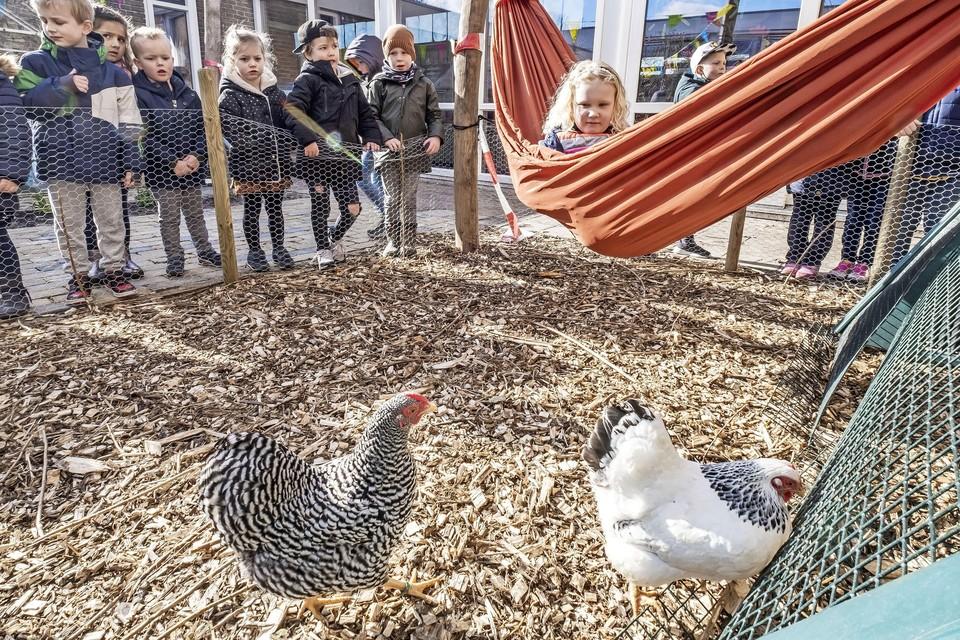 Lotte (in de hangmat) kijkt samen met haar klasgenootjes naar de kippen in de nieuwe buitenklas.
