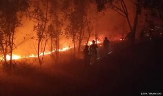 Meerdere doden door bosbranden in Turkije