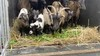 Wie heeft tien geiten gedumpt in recreatiegebied Spaarnwoude? Dierenpolitie Velsen staat voor raadsel en schakelt publiek in