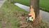 Slachtoffer dodelijk ongeval Wognum is man (31) uit Abbekerk: 'Bizar, hoe die auto helemaal om de boom heen zat'