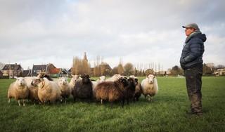Ellen Kraan: van paardenmeisje tot schapendrijver